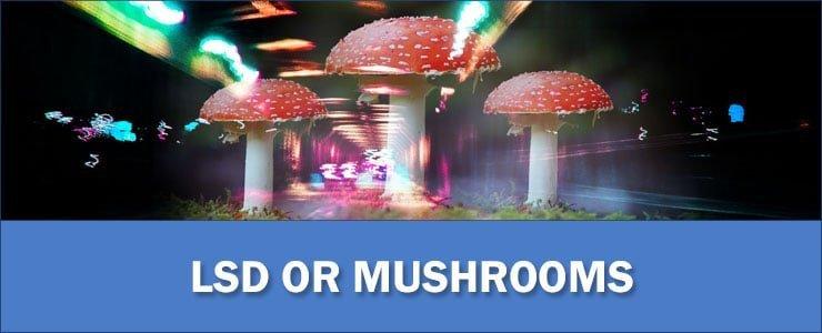 LSD-or-Mushrooms (1)